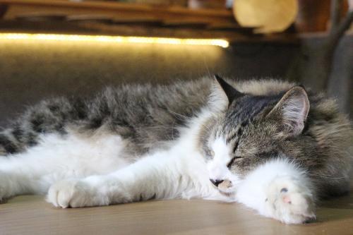 兄弟猫が3匹います。キジトラ、三毛、モフモフ。猫嫌いさんはごめんなさい