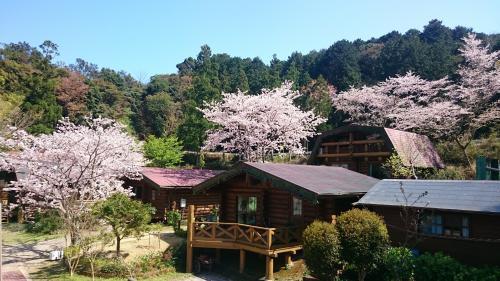 春は桜が人気です。